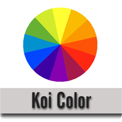 Koi Color